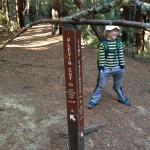 20131123, serendipitous balancing sticks